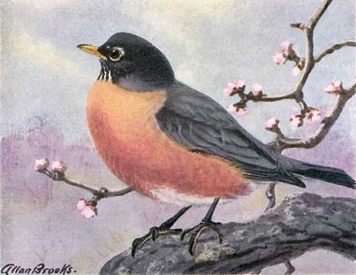 Painting of a robin perched on a tree branch with blossoming tree twigs and sun lit clouds in the background.