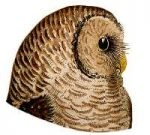 See species information for the barred owl