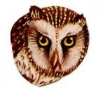 See species information for the boreal owl