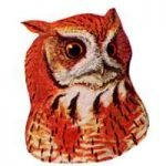 Select to read information for the eastern screech owl.