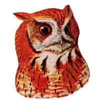 Select to visit Eastern Screech Owl species page.
