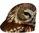 Visit the species information page for saw-whet owl