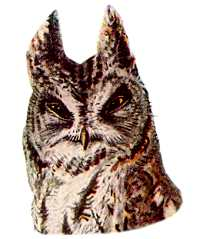 Visit the Western Screech Owl Species Page