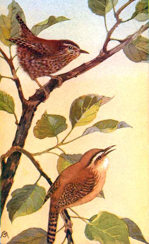 Painting of winter wrens perched on tree branches one singing.