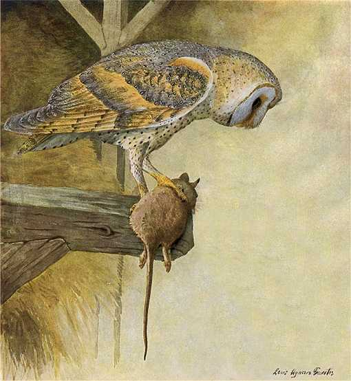 Painting of a barn owl with its rodent prey perched on an interior barn beam.