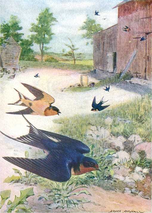 Painting of barn swallows swooping throughout a barn yard catching flying insects.