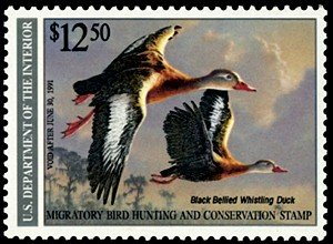 Flying black-bellied tree ducks illustrated on a Federal duck stamp sold to accompany hunting licenses.