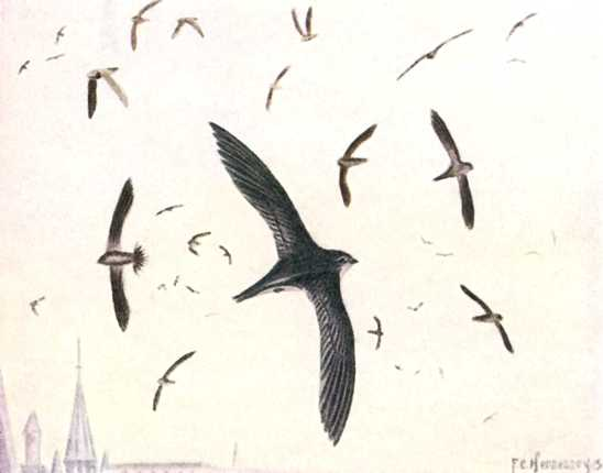 A painting of a flock of chimney swifts flying high with a sky background.