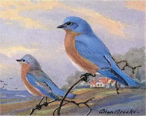 Painting of an eastern bluebird pair perched on twigs with field and home among trees in the background.