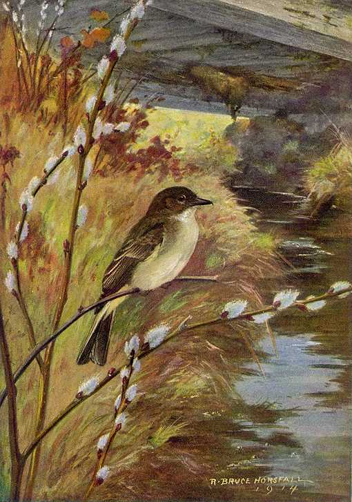 Painting of eastern phoebe perched on a branch overhanging a stream with a bridge crossing the stream among foliage in the background