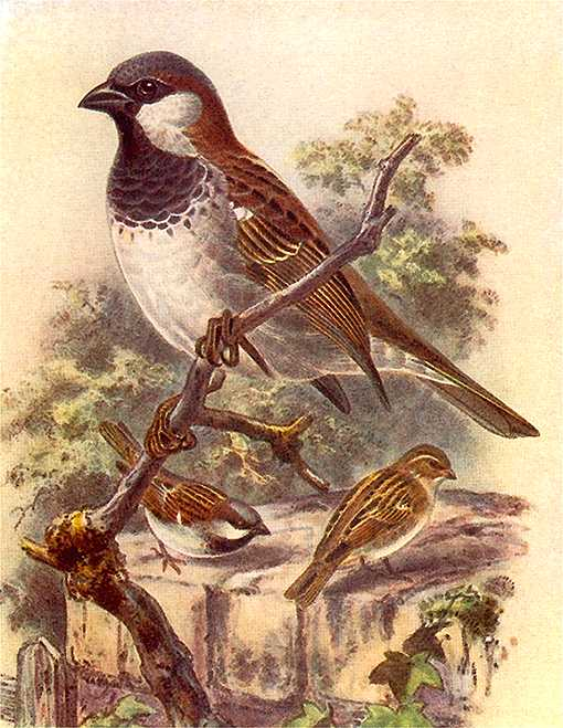 Painting of an English perched on a branch and others foraging on the ground.