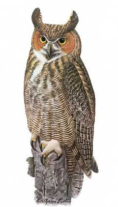 See 6 birdhouse plans for 9 owl species