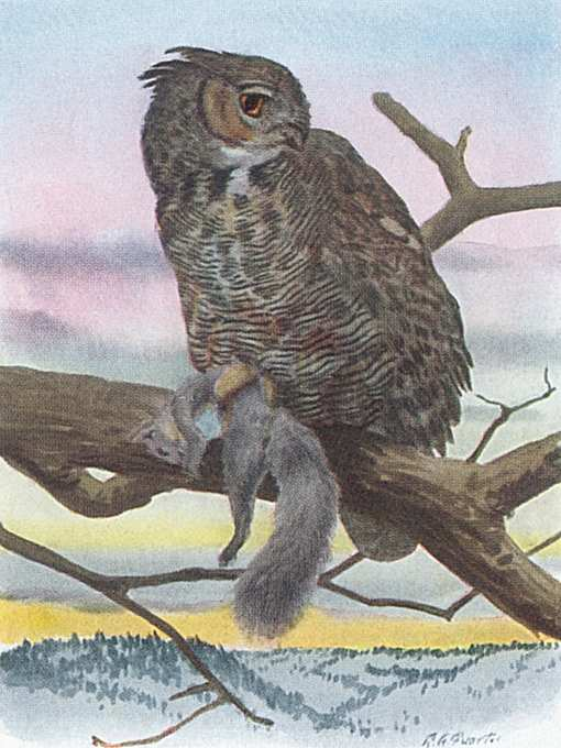 Painting of a great horned owl perched in a tree with prey in its talons in a snowy forest.