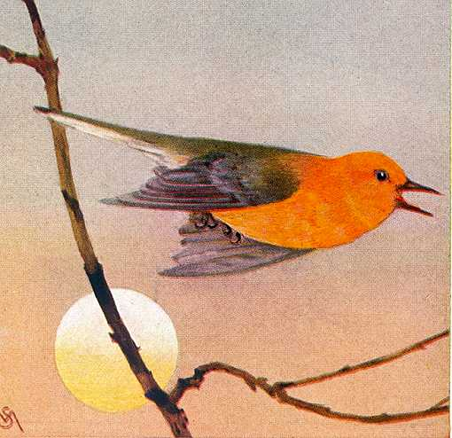Painting of a prothonotary warbler flying past a rising sun background.