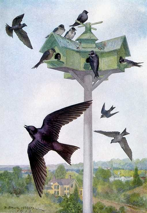 Painting of purple martins soaring, foraging for flying insects over and around their house.