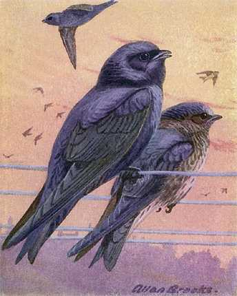Painting of purple martins perched on high line wires under a colorful sunlit sky.