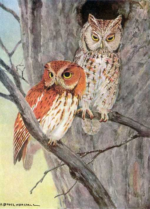 Painting of a pair of screech owls perched on tree branches near a tree cavity entrance.