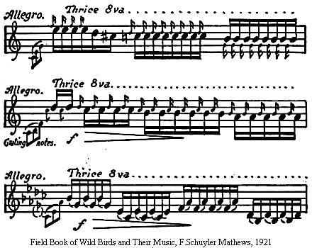 House wren song written to sheet music.