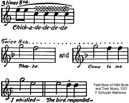 Musical score of the black-capped chickadee song.