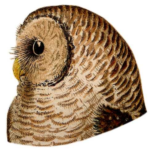 Visit the barred owl species page.