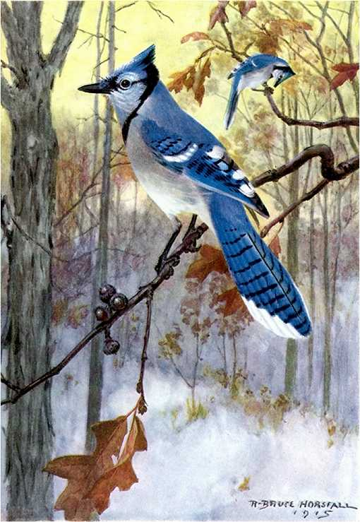 Painting of a blue jay perched on a branch in a forest.