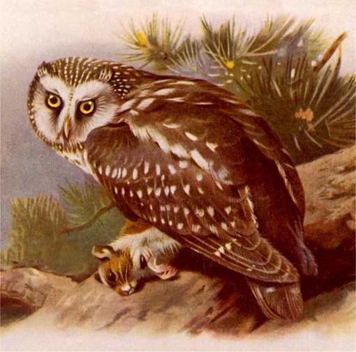 Painting of a boreal owl perched on a fallen log with prey in its talons and foliage in the background.