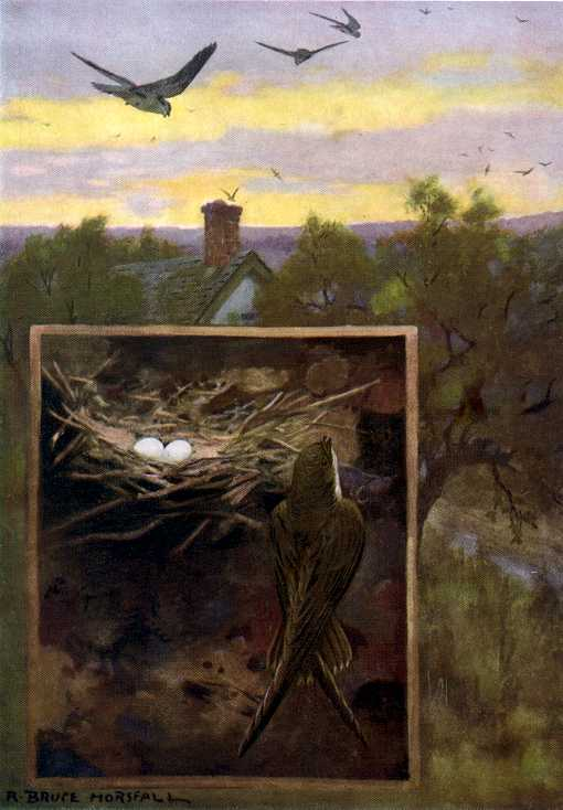Painting of chimney swifts flying over a home with a prominent chimney among trees against an early evening sky and a second inset scene of a swift nest with eggs.
