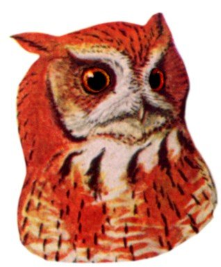 Visit the eastern screech owl species page.