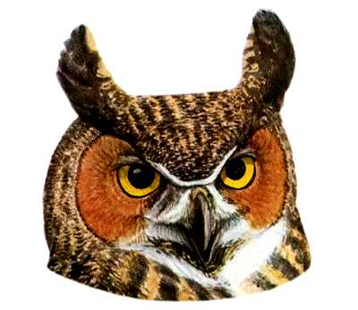 See species information for the Great Horned Owl