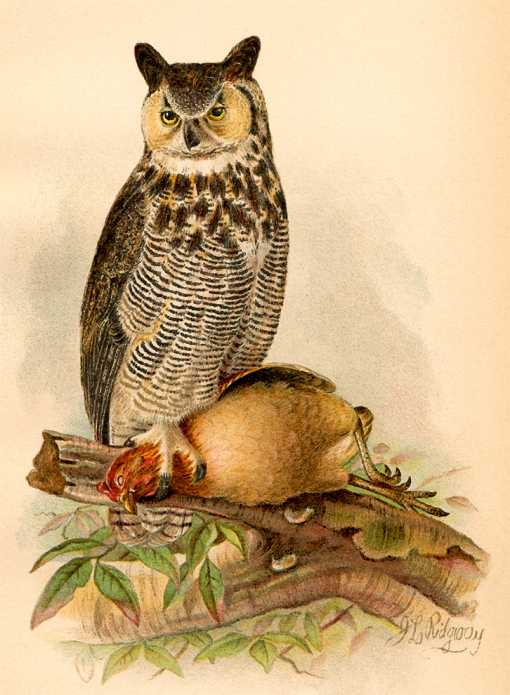 Painting of a great horned owl perched on a log with a captured grouse.