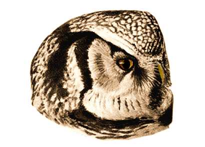 See species information for the hawk owl