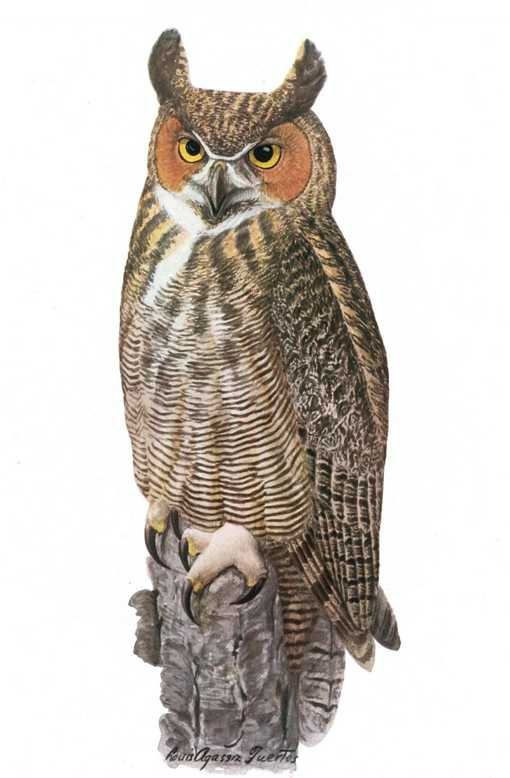 Painting of a great horned owl perched on a tree stump.