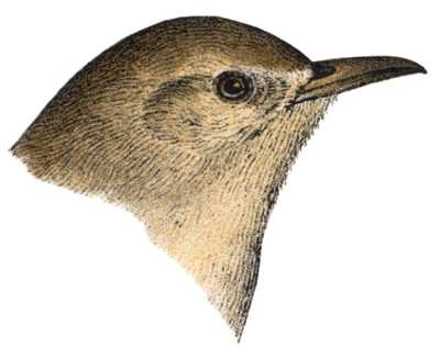 Visit the House Wren Page
