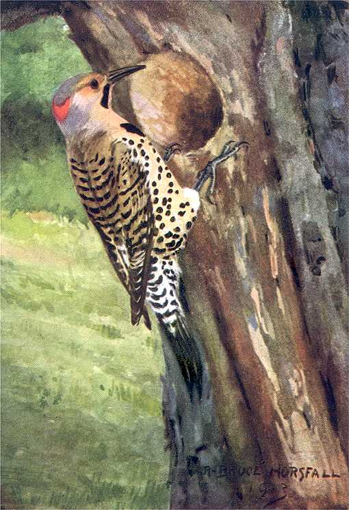 Painting of northern flicker perched in front of a tree cavity with a grassy ground and foliage in the background.