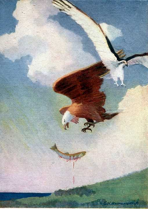 Painting of a bald eagle chasing and robbing an osprey of its salmon prey.