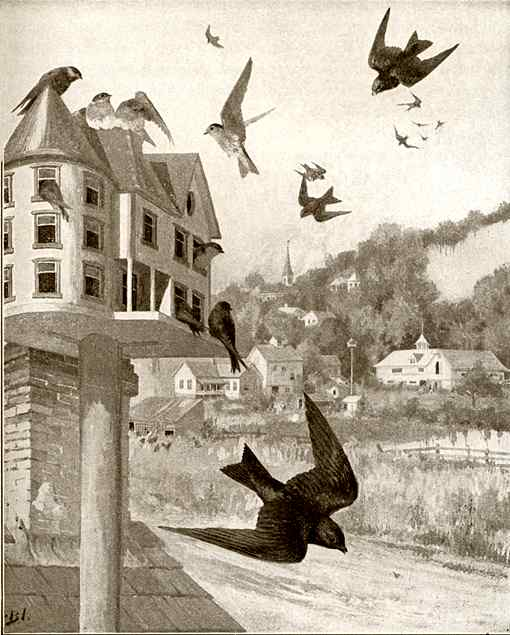 Illustration of purple martins flying and foraging for insects near their home.