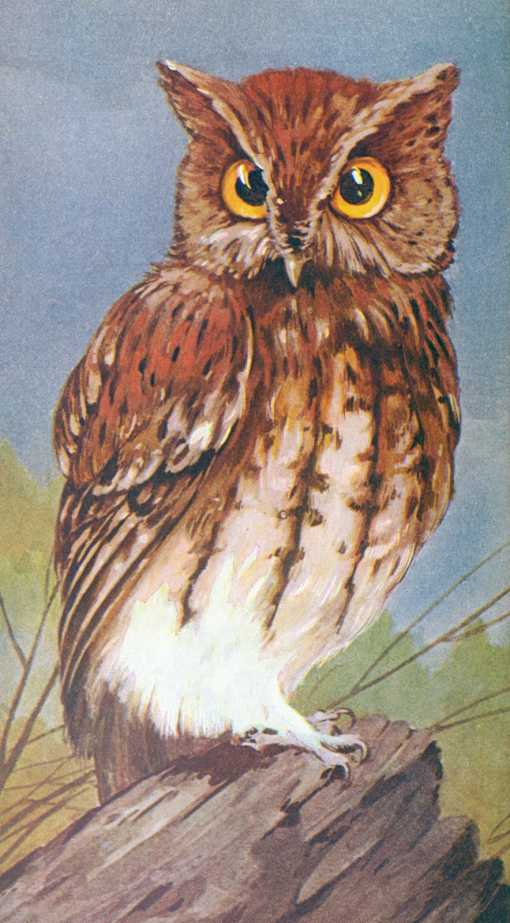 Painting of a screech owl perched on a stump.