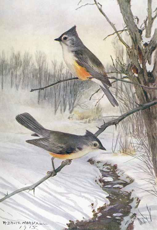 Painting of two tufted titmice perched on tree branches overhanging a small flowing creek through the snow covered forest floor