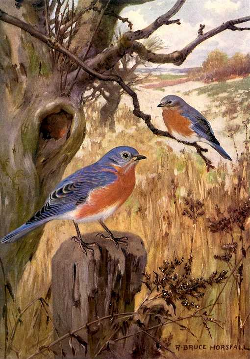 Colorful painting of an eastern bluebird pair perched next to their tree cavity entrance hole and a grass field background